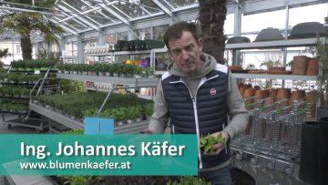 Jetzt Gemüse Pflanzen – Efz 2021 004 02