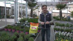 Gartentipp Mit Johannes Käfer
