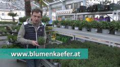 Gartentipp Gewürzkräuter 2021 Efz193